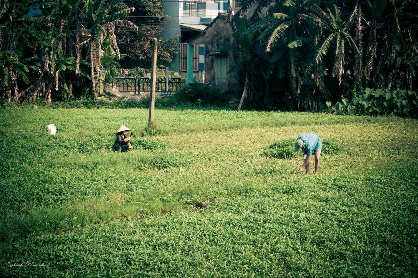 Hoï An Vietnam (16)