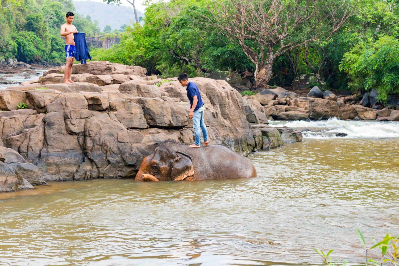 bain des éléphants laos