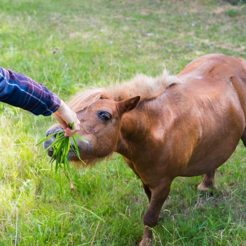 ecologia cheval