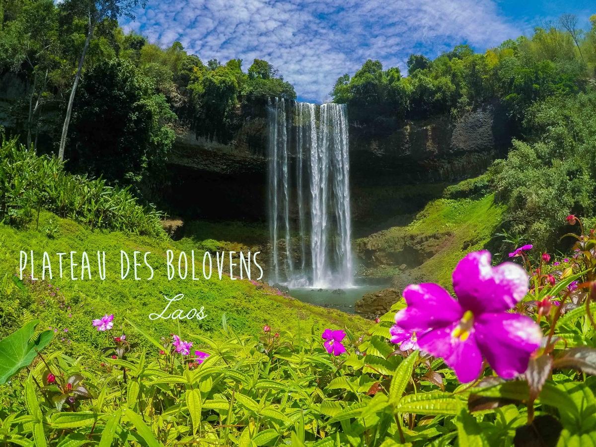 plateau des bolovens cascade laos