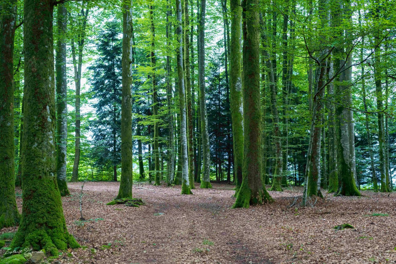 forêt vosges sud saint bresson