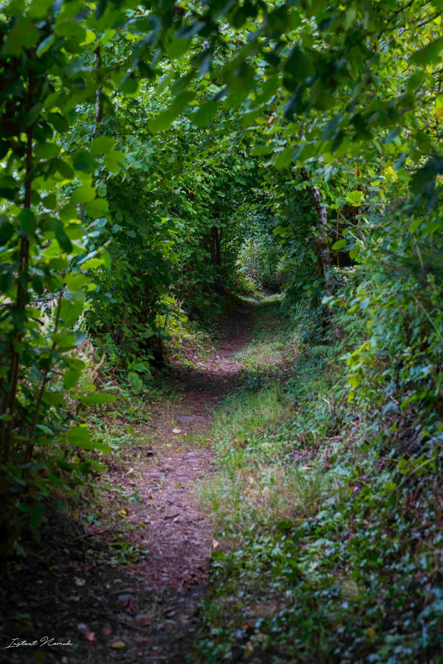 forêt vosges sud