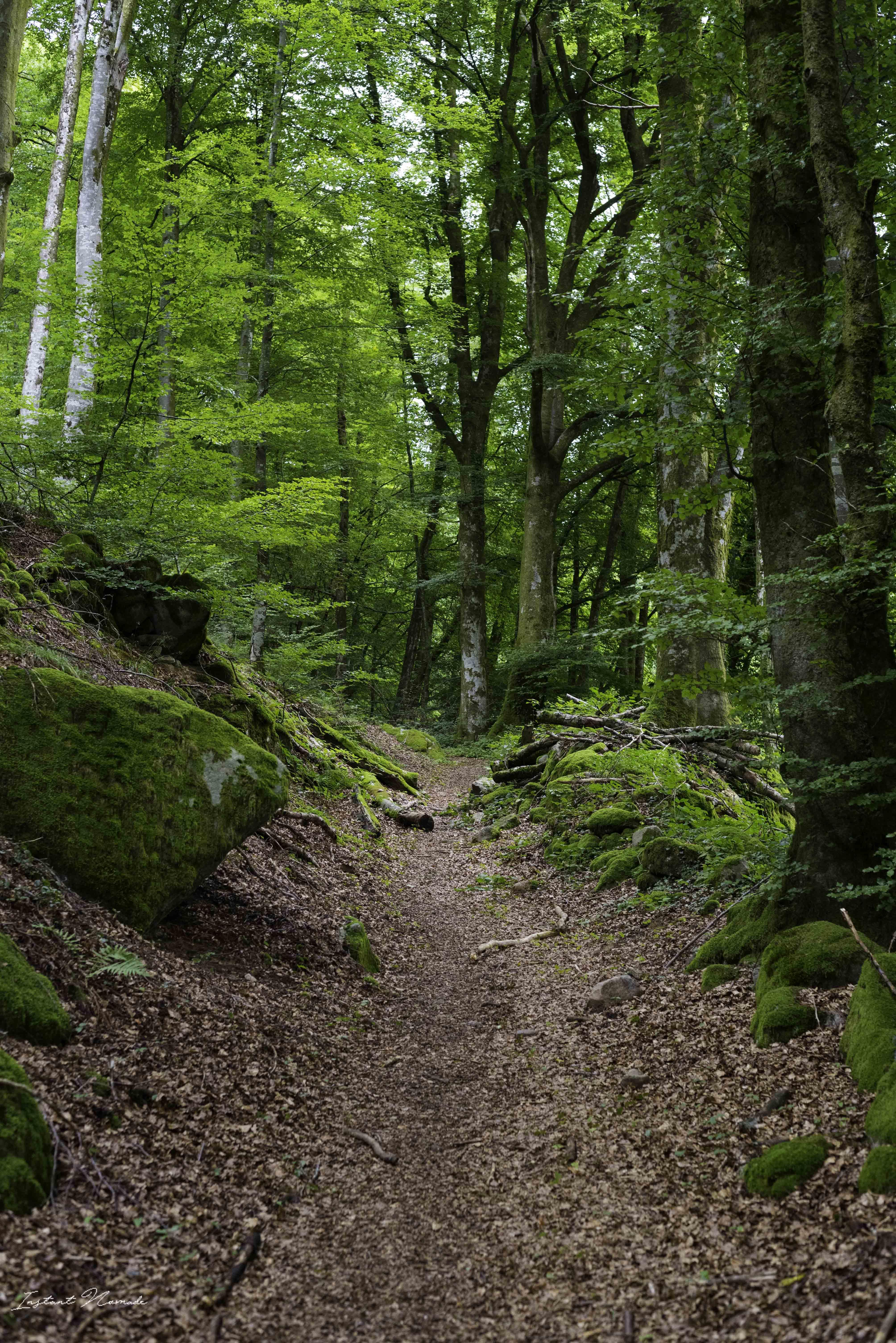 randonnée saint bresson vosges sud
