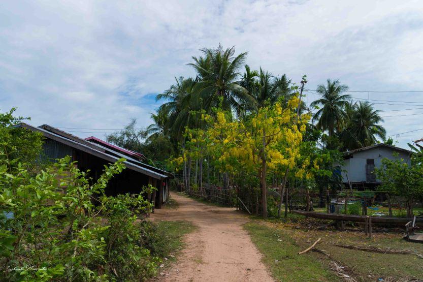 don khone paysage laos 4000 iles