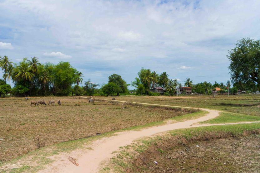 paysage don khone laos