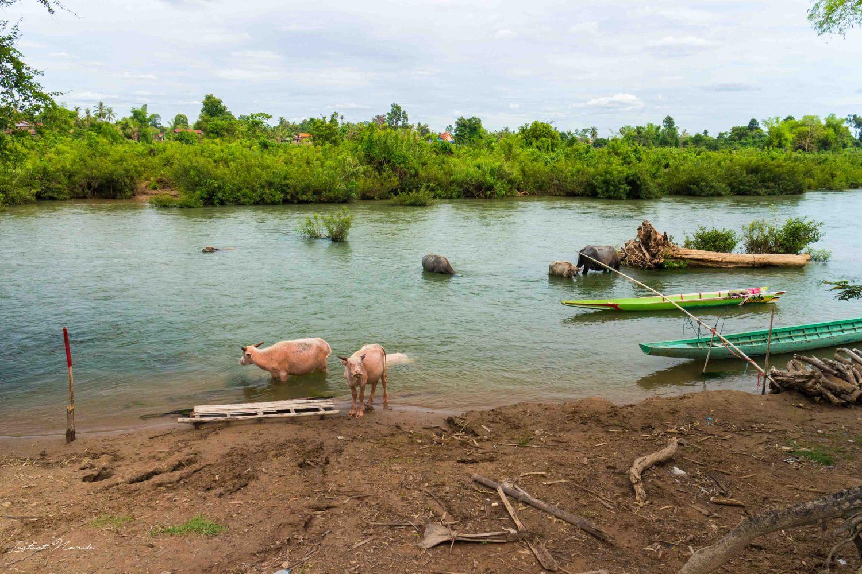 paysages don khone laos 4000 iles