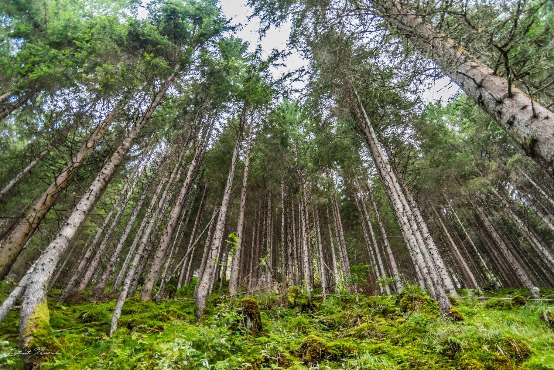 forêt krimml autriche