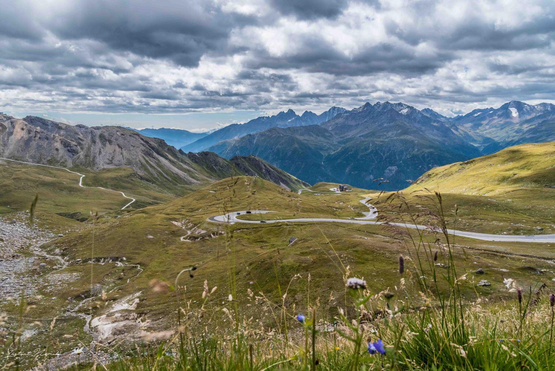 montagne fleur tyrol autriche