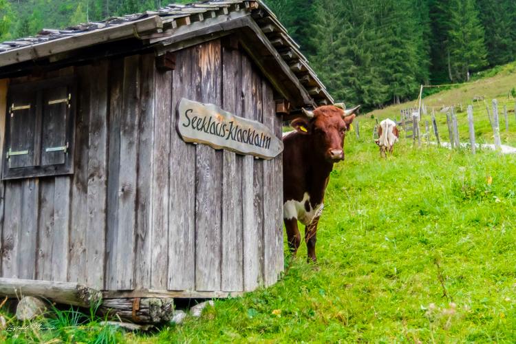 vache-montagne-autriche