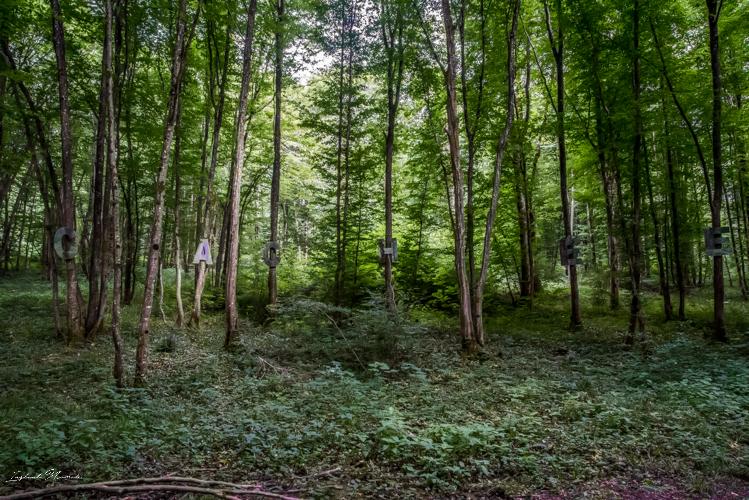 oeuvre vent des forêts verdun