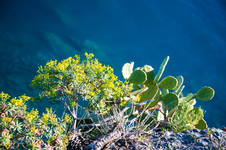 cactus cinque terre italie