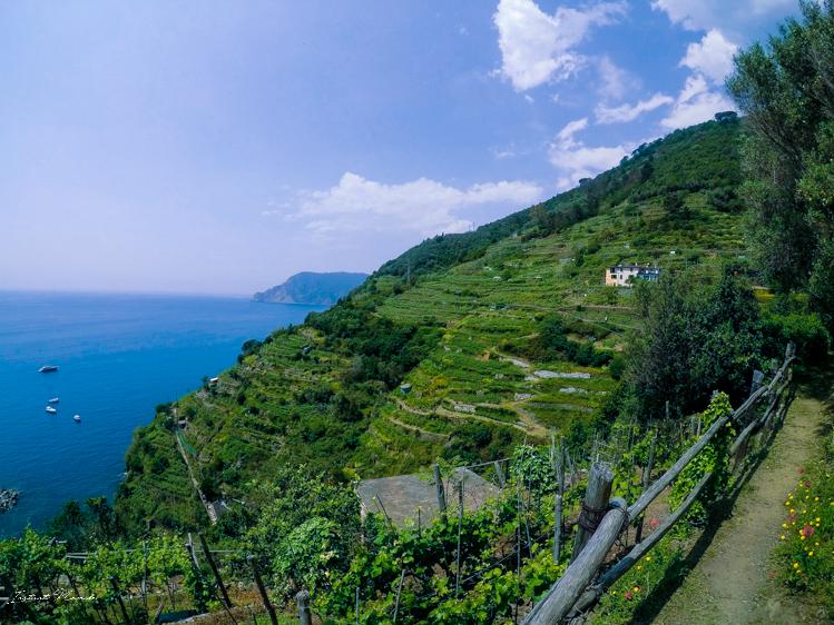 vignes cinque terre italie