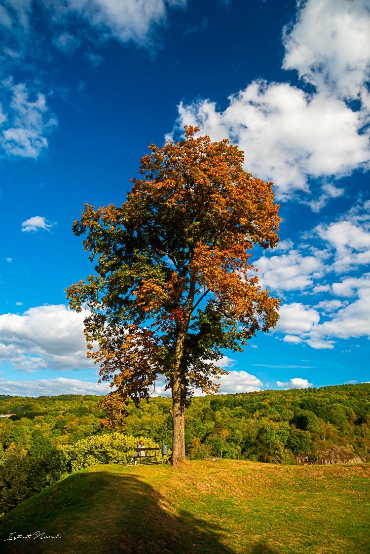 arbre chateau ducs de lorraine