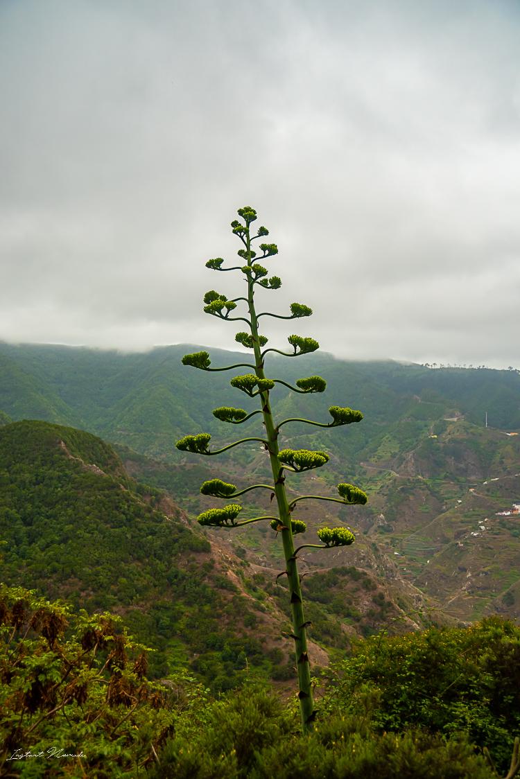 vegetation anaga