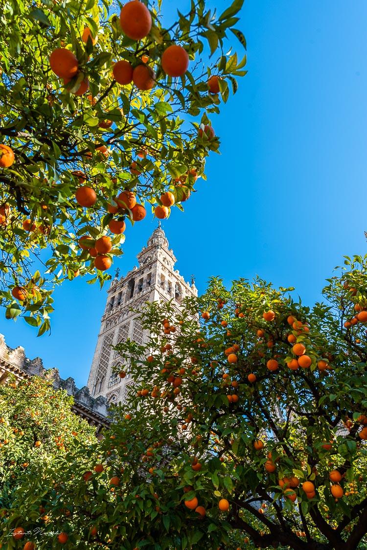gibralta cathedrale seville