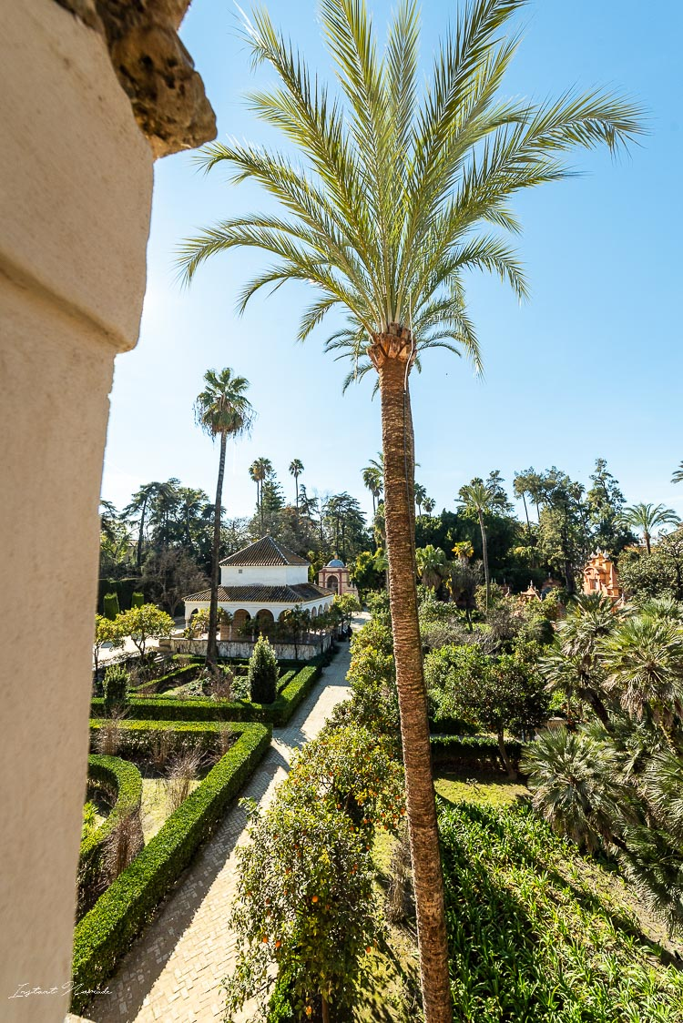 palmier alcazar seville
