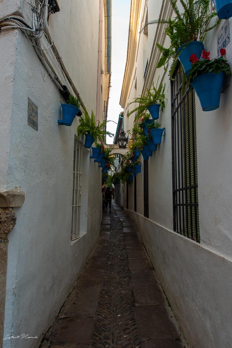 calle de las flores cordoue