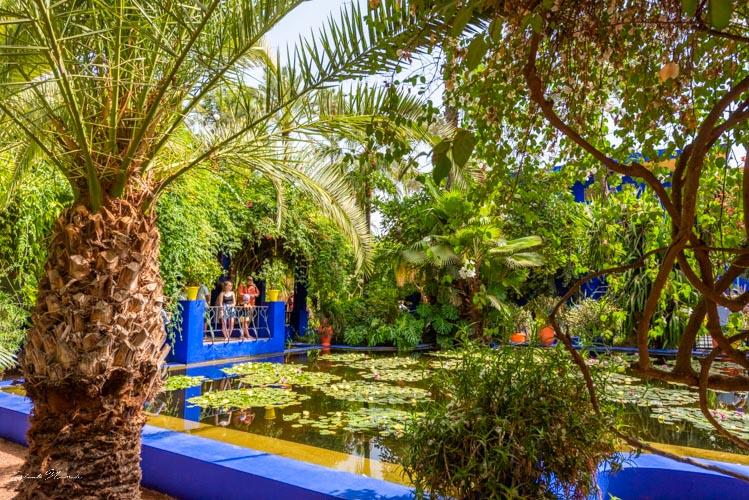 bassin jardin majorelle marrakech