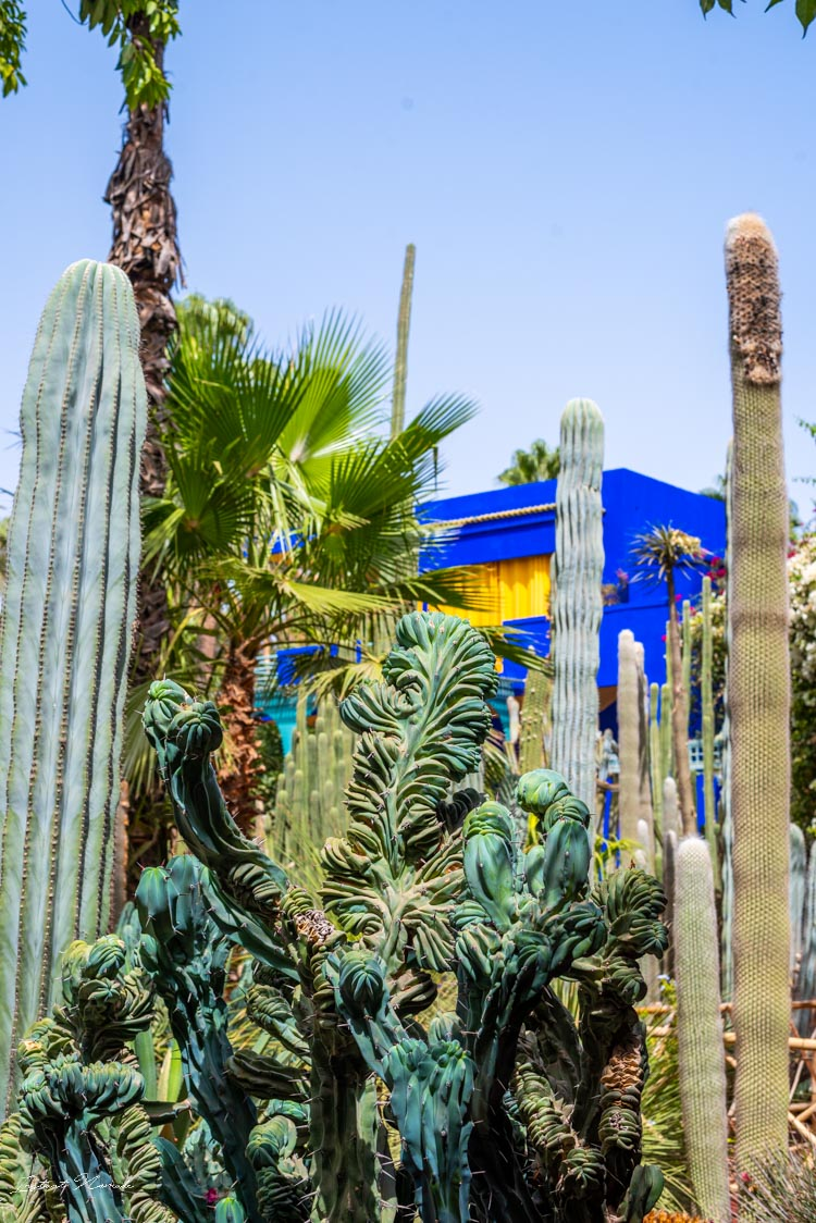 cactus jardin majorelle marrakech