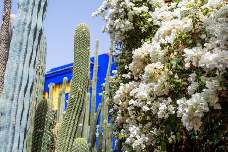 fleurs jardin majorelle marrakech