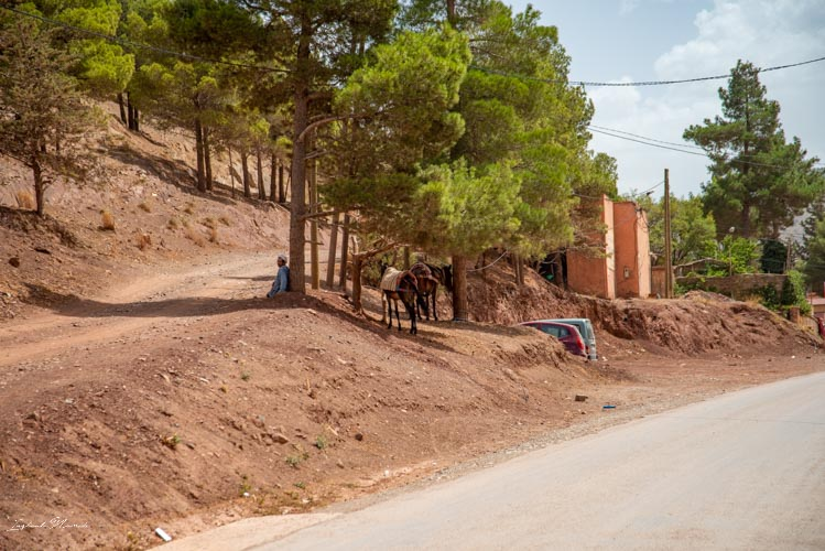 berbère maroc