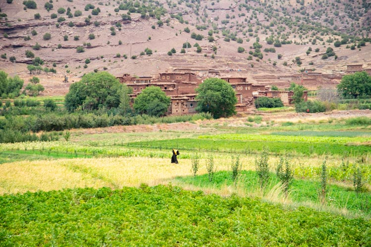 champ vallee heureuse maroc