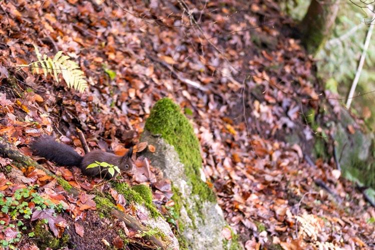 cascades triberg ecureuil