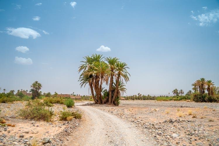 chemin palmeraie skoura