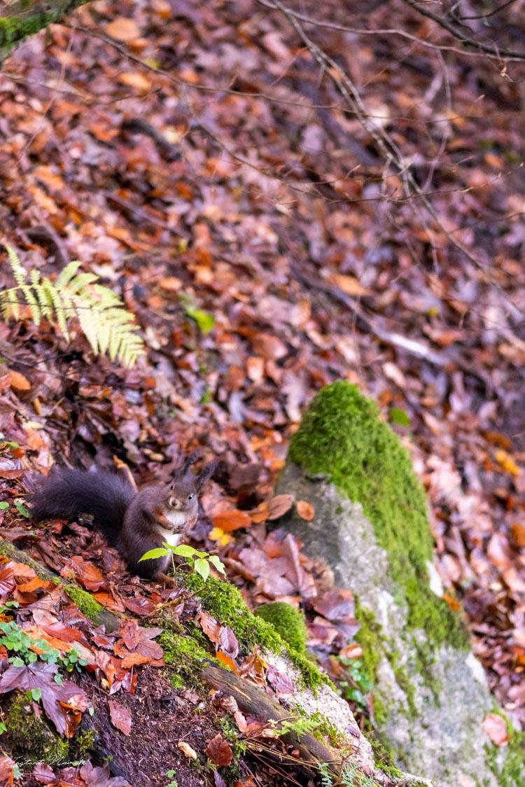 ecureuil cascades triberg