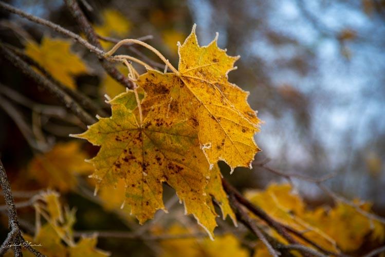 feuille automne chateau lichtenstein