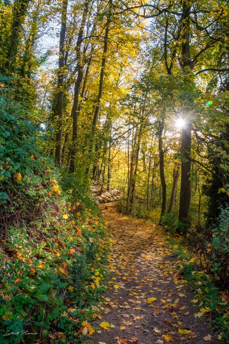 frisbourg en brisgau balade forestiere