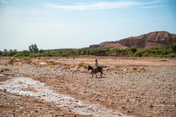marocain cheval