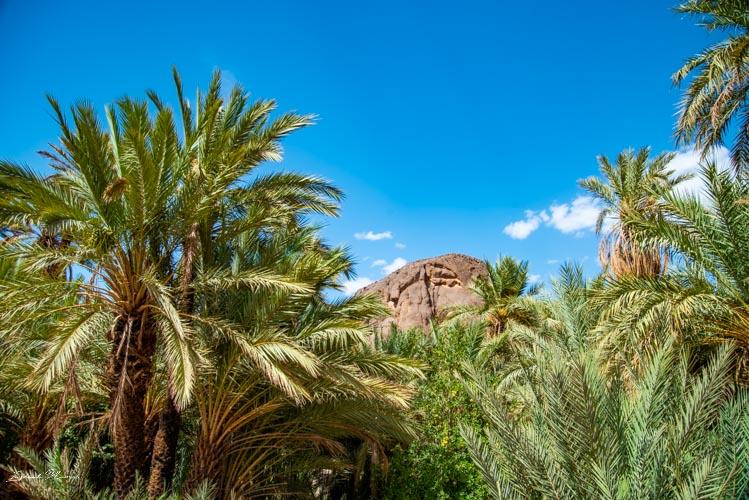 palmeraie maroc