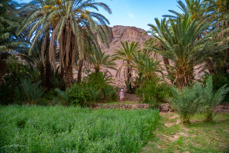 palmier oasis fint