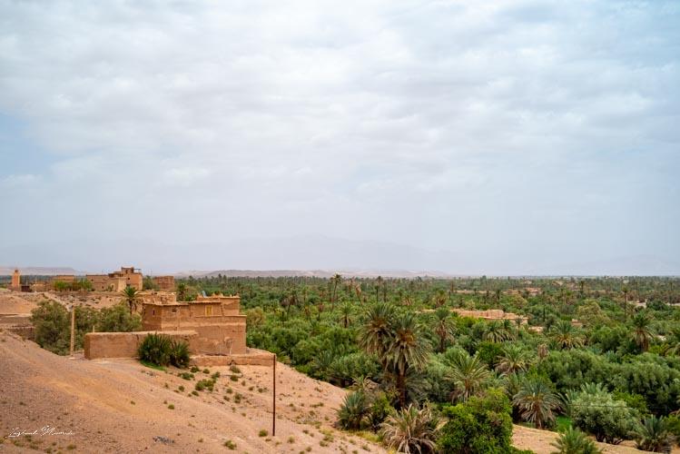 vue palmeraie skoura