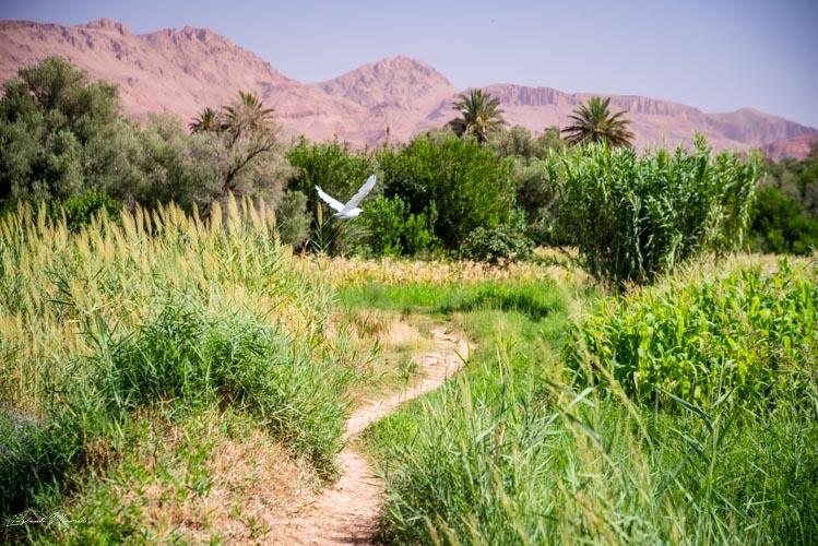balade palmeraie tinghir maroc