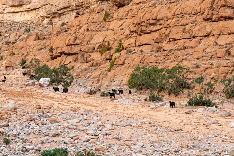 berger gorges todra maroc