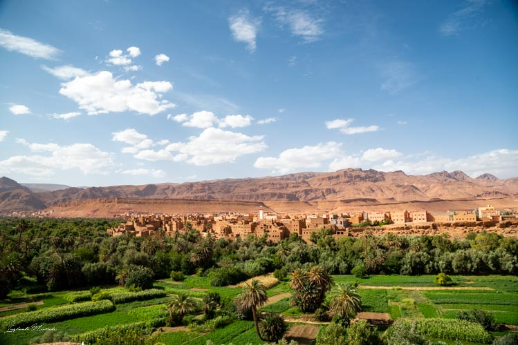 palmeraie tinghir maroc