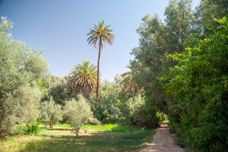 palmier tinghir maroc