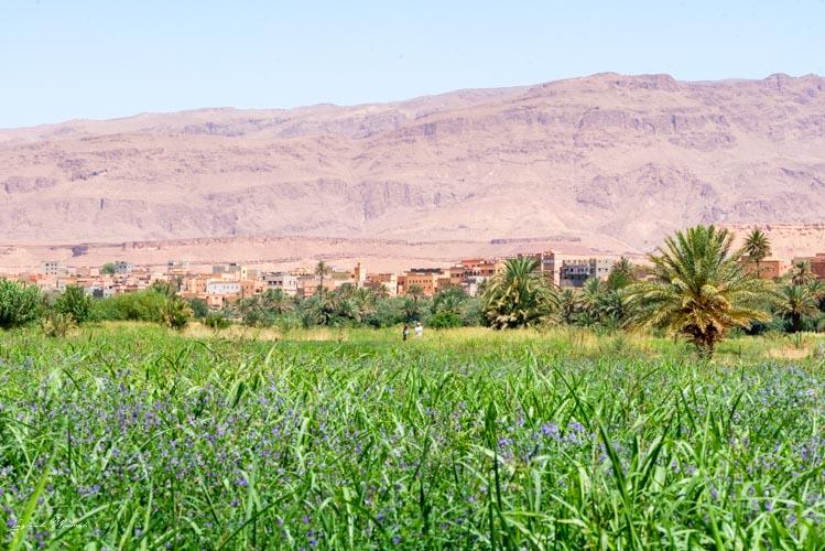 paysage palmeraie tinghir