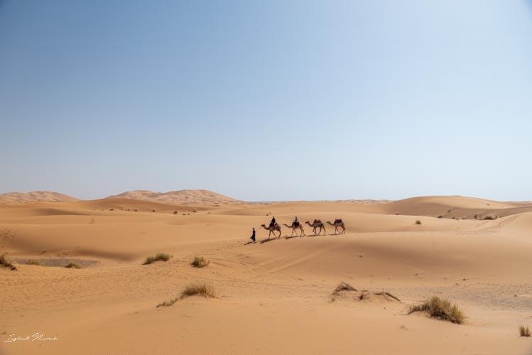 caravane désert maroc