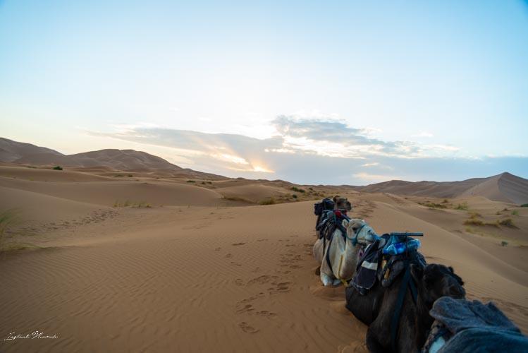 excursion désert merzouga
