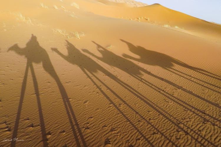 ombre chameau maroc
