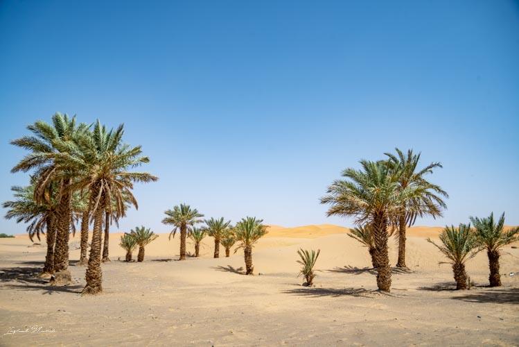 palmier désert maroc