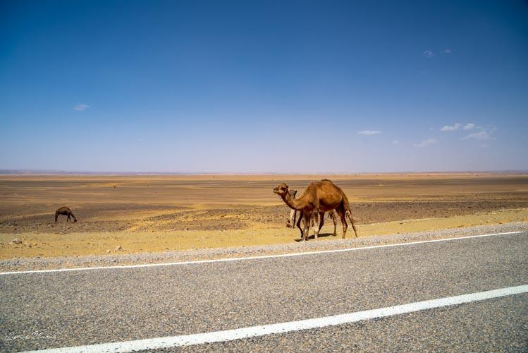 route merzouga maroc