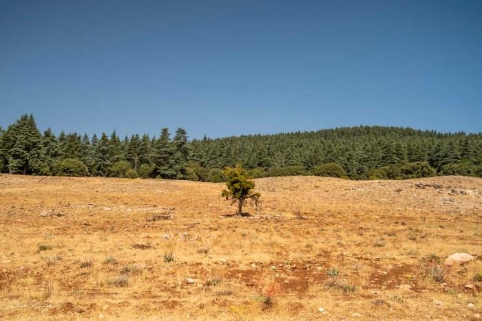 foret de cedre ifrane maroc