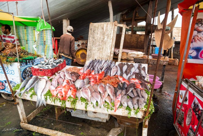 marché poisson essaouira maroc