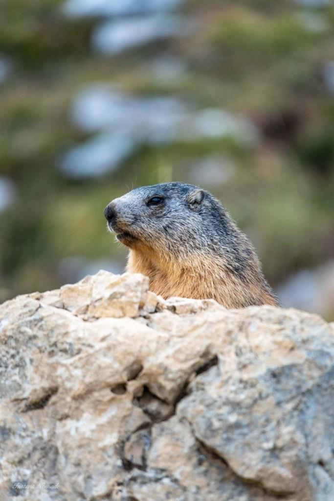 marmotte grand veymont