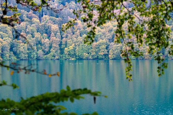 arbres lac pavin auvergne
