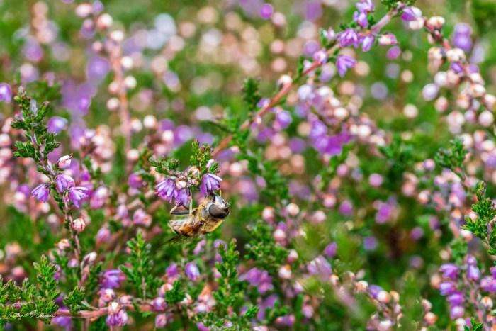 macro fleurs auvergne